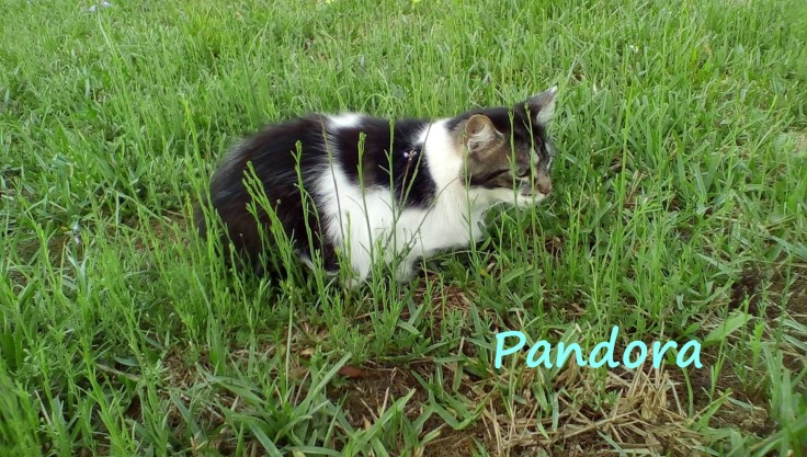 Pandora in grass